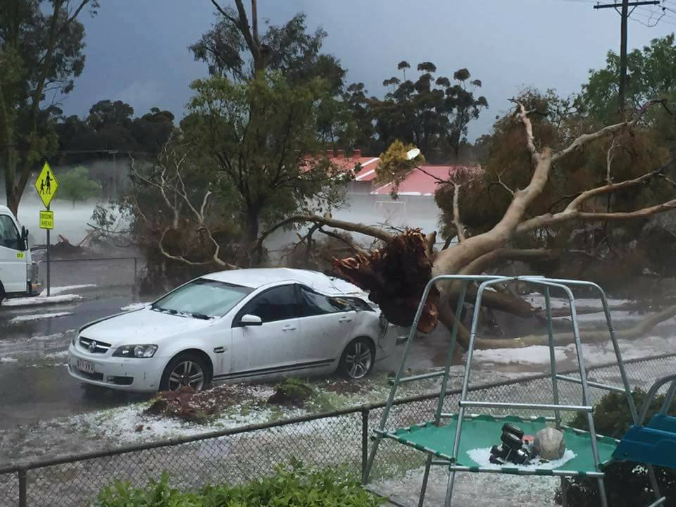 Massive tree uprooted and dropped on a car. Image Credit: Nicole Brown