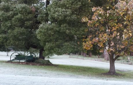 White start in Newborough, VIC via Esme Berkelmans