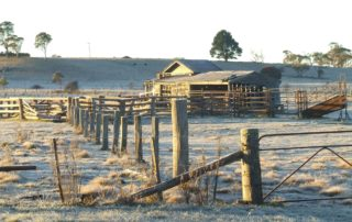 Stunning frozen paddock in Glen Innes where it was -5ºc. Image via Jo Hall