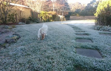 Heavy Frost from -5ºc in Mittagong / Bowral, NSW. Image via Trisha Kathleen