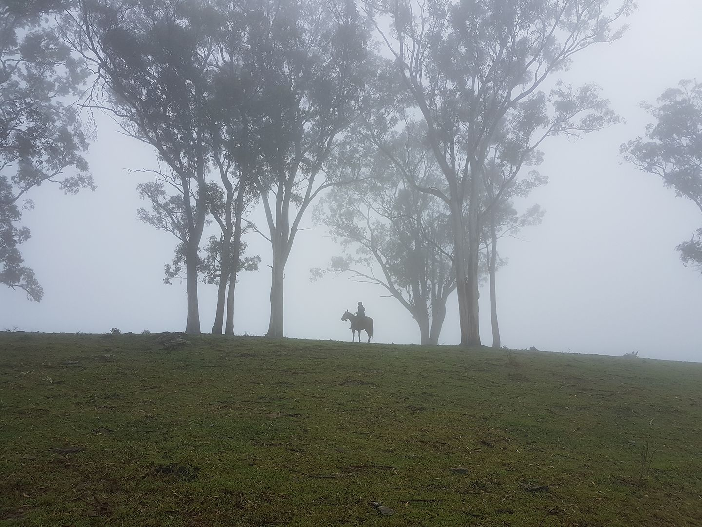 Horse riding in the clouds at Ocean View via Natasha Koning