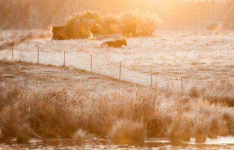 Frozen fields in Canberra on sunrise via Ainsley Morthorpe