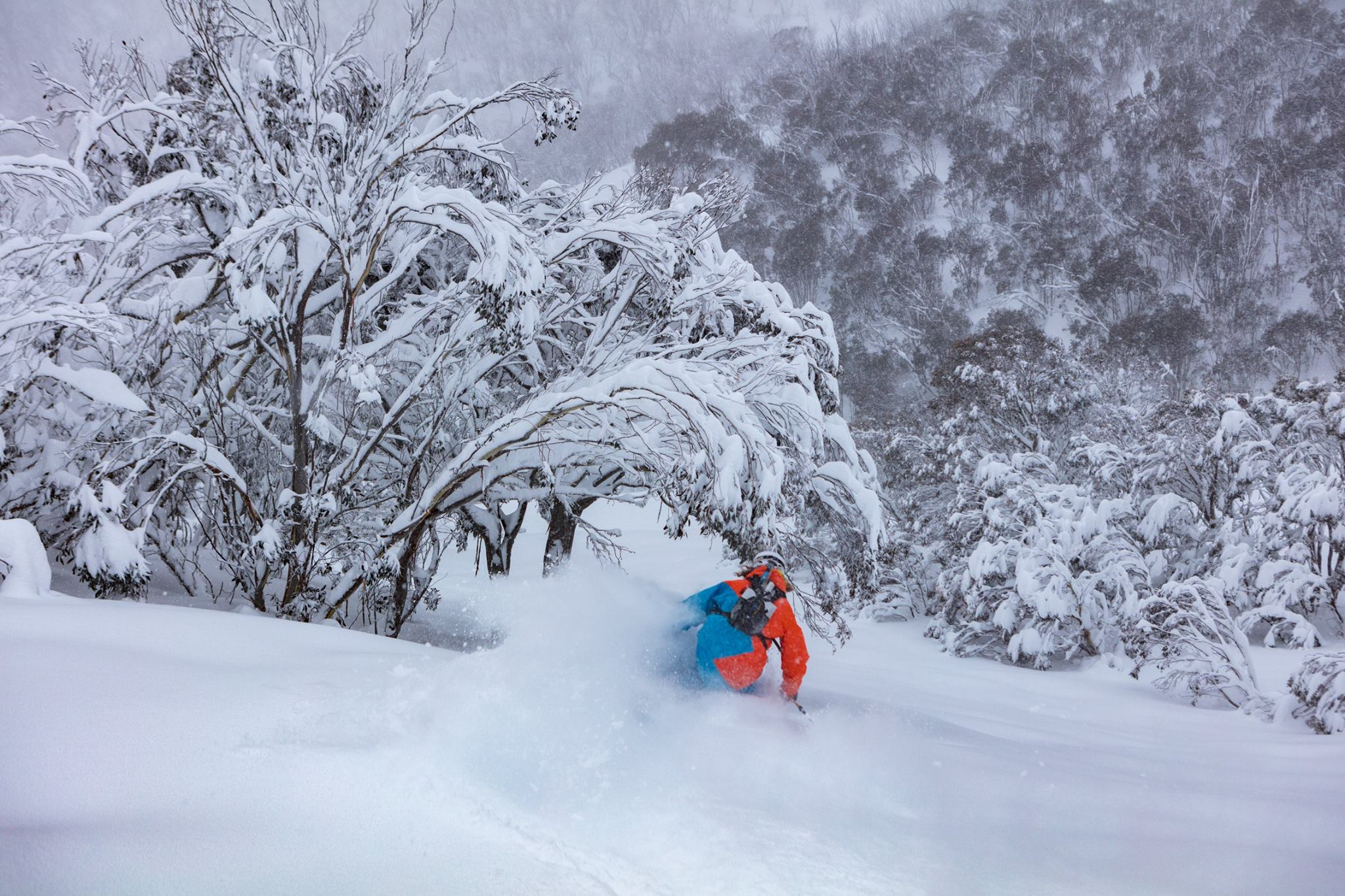 After 50cm in less than 24hrs, skiers take to the slopes at Hotham. Image via Hotham Alpine Resort