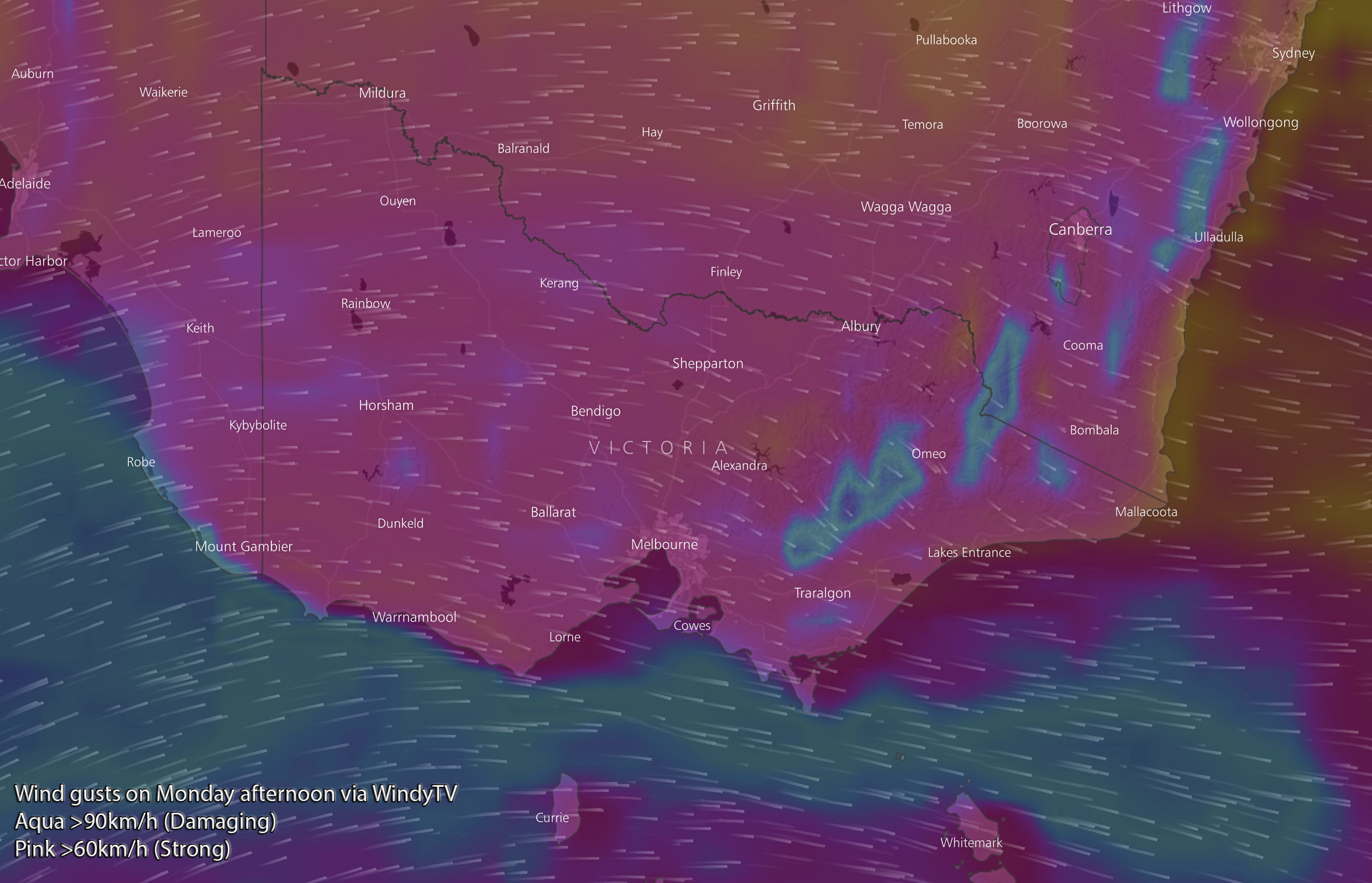 Forecast wind gusts on Monday afternoon via WindyTV. Aqua is over 90km/h, pink is over 60km/h