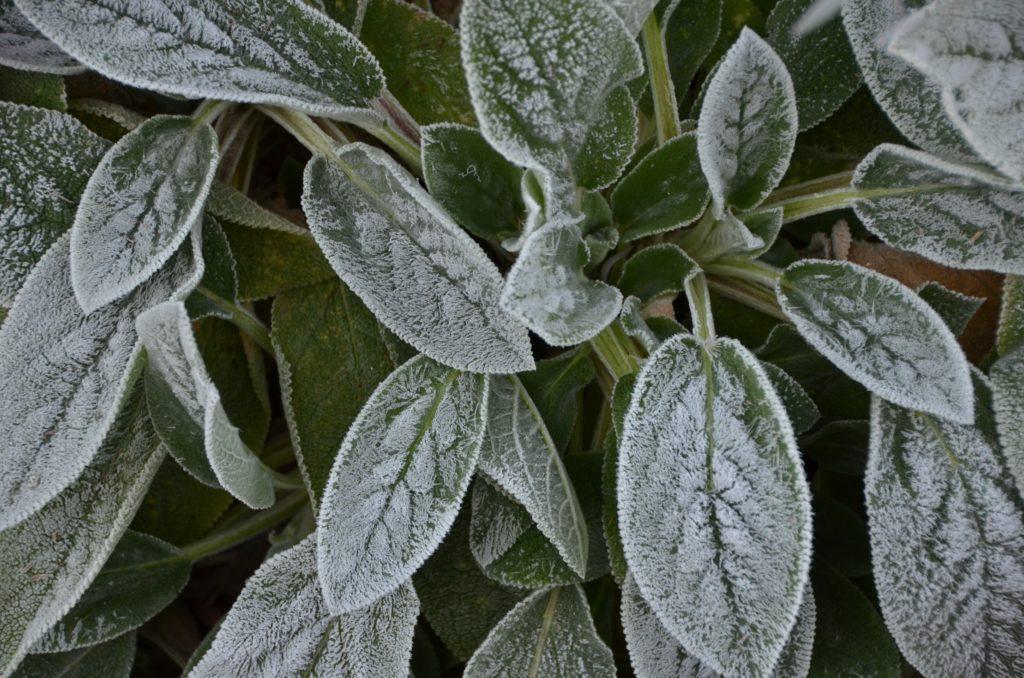 Advection Frost via Kathy Diemer